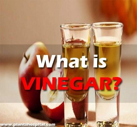 what-is-vinegar