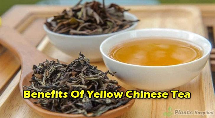 yellow-chinese-tea-benefits