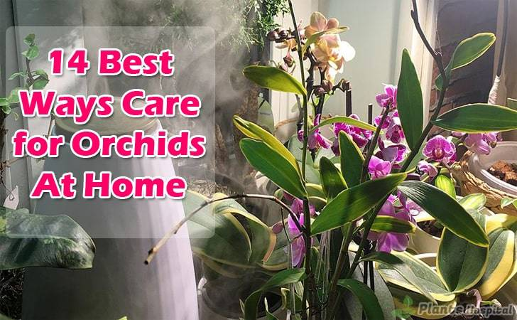 Best-ways care-for-orchids-at-home