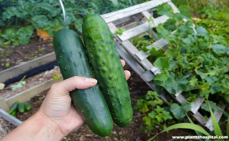 cucumber-positioning
