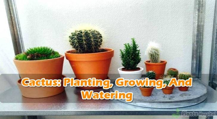 planting-cactus-at-home
