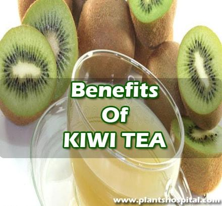what-is-kiwi-tea