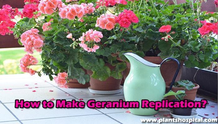 How-to-make-geranium-replication