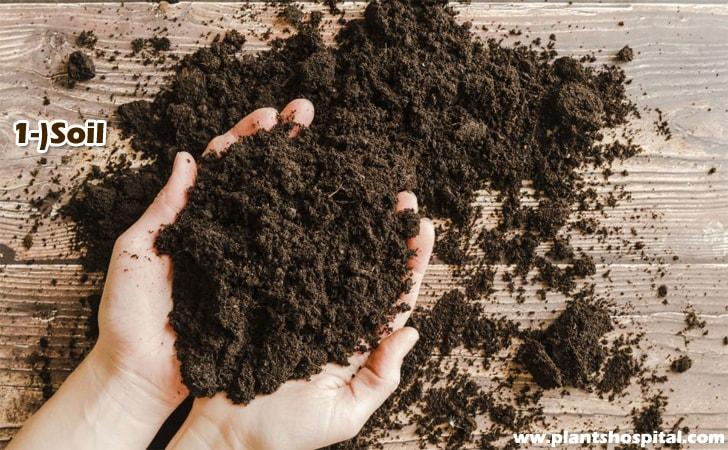 Soil Preparation for Banana Plants