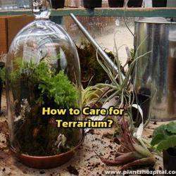 How-to-care-for-terrarium