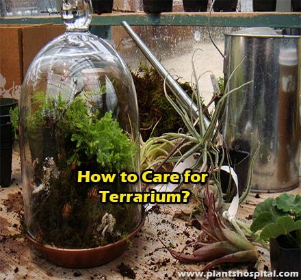 How-to-care-for-terrarium
