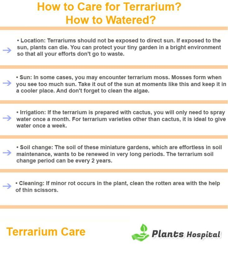Terrarium-care-graphic