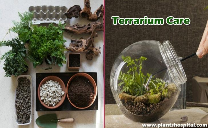 Terrarium-care