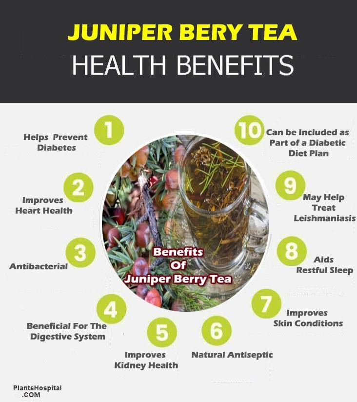juniper-berry-tea-graphic