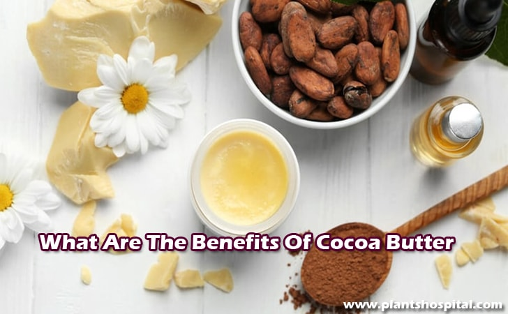 Cocoa-butter-benefits