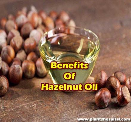 Hazelnut-oil-benefits