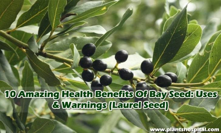bay-seed-benefits