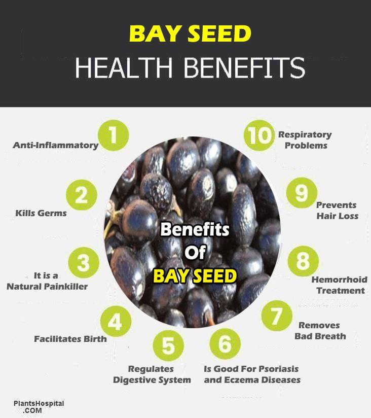 bay-seed-graphic