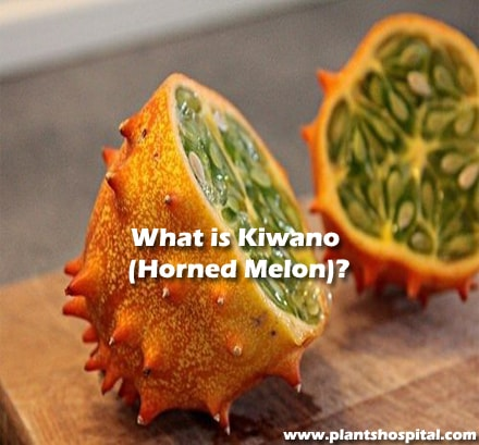 What-is-Kiwano